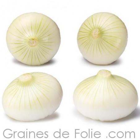 Oignon BLANC DE VAUGIRARD semences graines