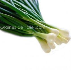Bio Oignon BLANC DE LISBONNE semences graines