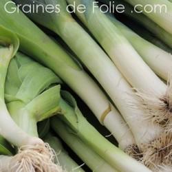Poireau Jaune GROS DU POITOU semences graines