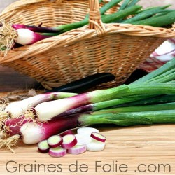 CIBOULE ROUGE CIVE Allium fistulosum semences graines seeds