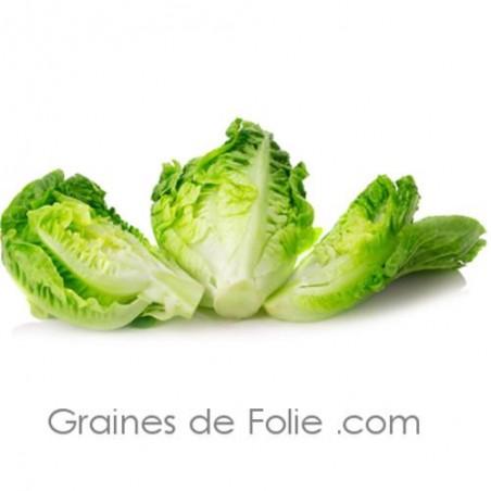 Bio Laitue romaine PARRIS ISLAND cos graines semences