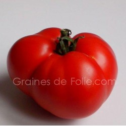 Bio Tomate MARMANDE graines certifiée agriculture biologique