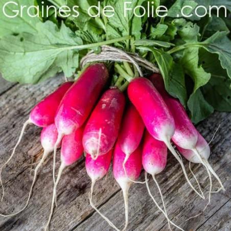 Bio Radis French Breakfast 3 graines plantes potagères