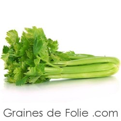 Céleri Branche Vert  d'Elne graines