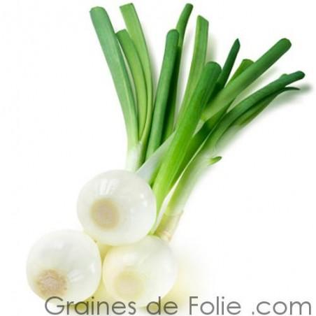 Oignon Blanc HATIF DE PARIS graines