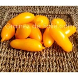 Tomate BANANA LEGGS