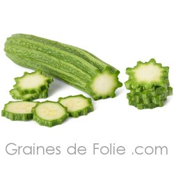 Courgette COSTATA ROMANESCO graines semences légumes anciens