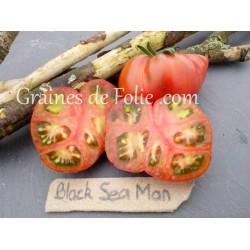 Bio Tomate BLACK SEA MAN graines semences tomato seeds