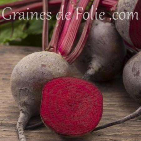 Betterave NOBOL graines semences potagères glomérules