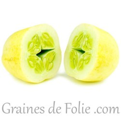 Concombre CRYSTAL APPLE graines semences cucumber seeds pomme
