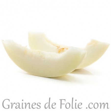 Melon blanc BRANCO do RIBATEJO graines semences semailles