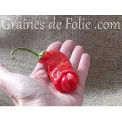 Trio Piment Pénis graines semences peter's pepper