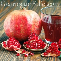 GRENADIER Punica Granatum graines semences seeds samen