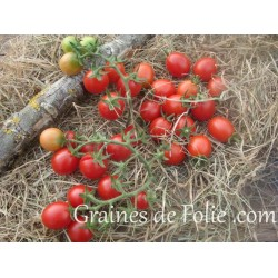 Tomate PRINCIPE BORGHESE graines semences certifiées bio