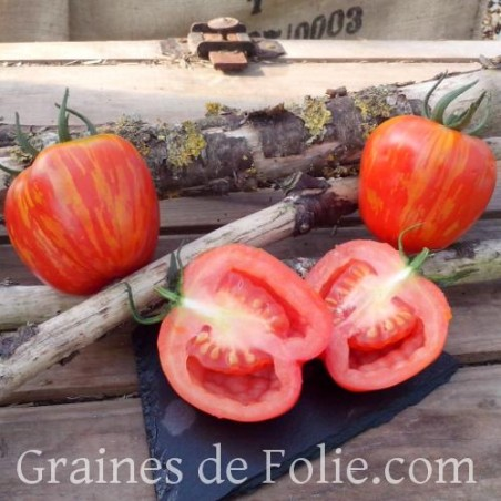 Tomate STRIPED STUFFER semences graines heirloom tomato seeds