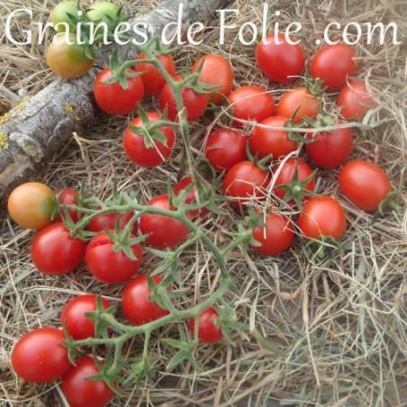 Bio Tomate PRINCIPE BORGHESE graines semences