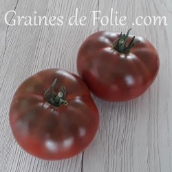Bio Tomate CHEROKEE CHOCOLATE graines semences