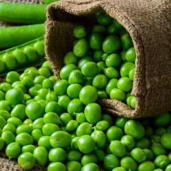 Bio Pois Nain DOUCE DE PROVENCE graines semences certifiée AB agriculture biologique