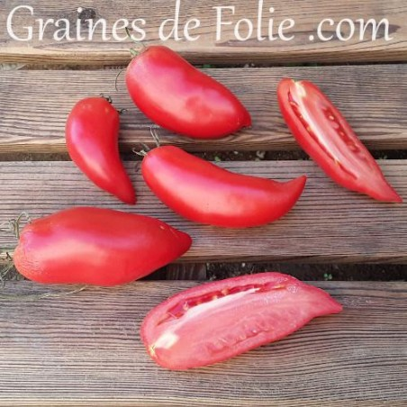 Bio Tomate JERSEY DEVIL graines semences tomato seeds