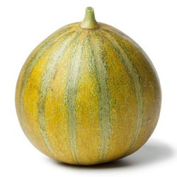 Bio Melon OGEN graines semences seeds