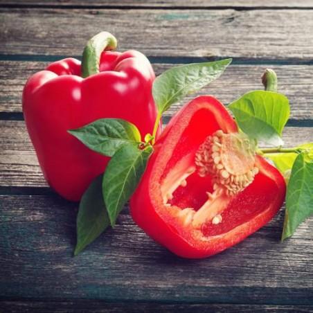 Poivron Rouge rosso d'Asti graines semences non traitées