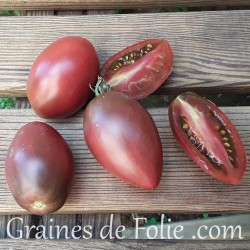 Bio Tomate PURPLE RUSSIAN graines semences anciennes tomato seeds