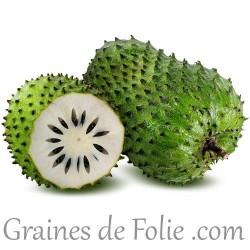 COROSSOLIER Annona Muricata graines seeds