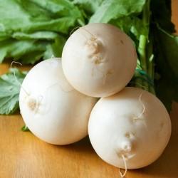 Navet BOULE de NEIGE graines semences légumes anciens
