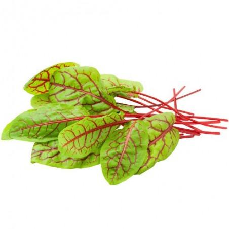 Oseille sanguine veinées rouge Rumex Acetosa graines