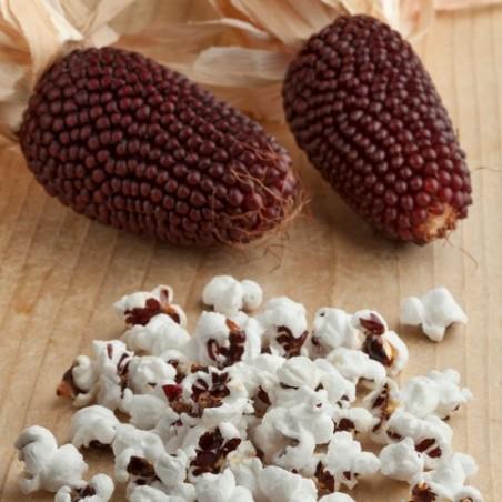 MAÏS FRAISE zea gracillima popcorn graines semences