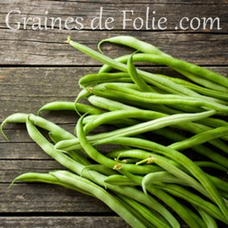 Haricot FERRARI graines semences certifiée BIO Agriculture Biologique