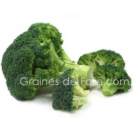 Chou BROCOLI CALABRESE graines semences paysannes non traitées