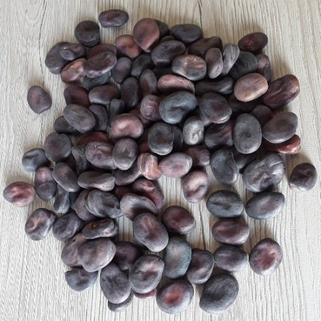 Fèves à grain violet graines a grano violetto semences certifiée AB