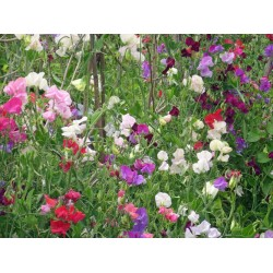 graines fleurs