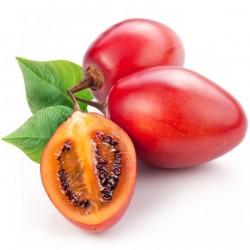 TAMARILLO Tomate en Arbre cyphomandra solanum betacea graines semences seeds samen semi semillas