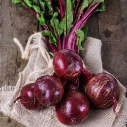 Betterave ROUGE de DETROIT graines semences potagères anciennes