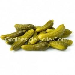 Cornichon petit vert de Paris graines semences BIO AB