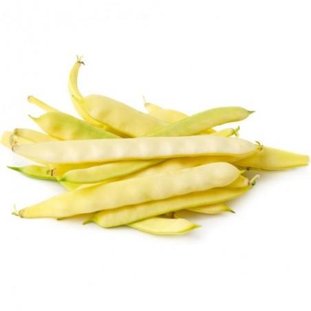 Haricot à RAMES Merveille de VENISE ou Or du RHIN graines beurre