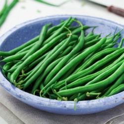 Haricot extra nain Filet TALISMAN mangetout graines semences