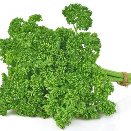 Persil frisé grüne perle fin graines