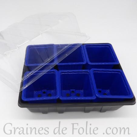 Mini serre avec 6 godets pour semis couleur bleu foncé