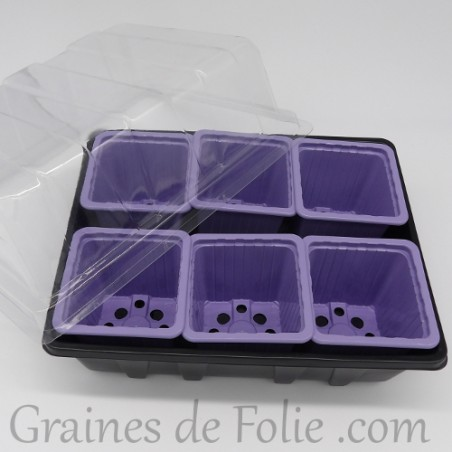 Mini serre avec 6 godets pour semis couleur mauve