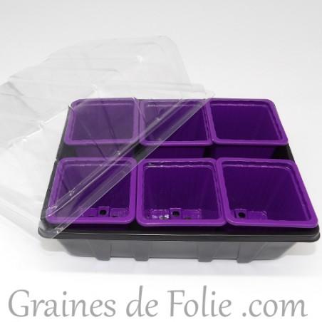 Mini serre avec 6 godets pour semis couleur violet