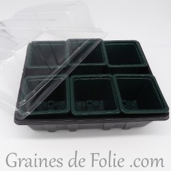 Mini serre avec 6 godets pour semis couleur vert sapin