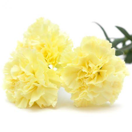 OEILLET des FLEURISTES CHABAUD jaune graines semences fleur
