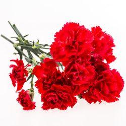 OEILLET des FLEURISTES CHABAUD ROUGE ECARLATE graines semences fleur