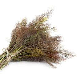 FENOUIL BRONZE graines plantes aromatiques non traitées
