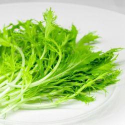 Chou JAPONAIS MIZUNA VERT graines semences non traitées