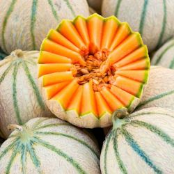 Melon CHARENTAIS graines semences anciennes oubliées