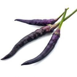 Piment CAYENNE VIOLET graines semences non traitées